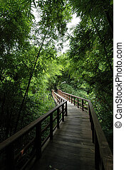 Passage to Forest - Wooden walkway in the densed bamboo...