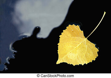 Yellow Aspen Leaf
