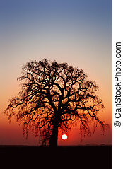 Winter Oak Tree and Setting Sun