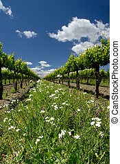 Grape Vines and White Flowers