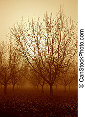 Sepia Tone Sunrise and Bare Walnut Trees