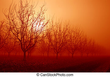 Orange Sunrise Behind Walnut Trees - Orange Sunrise Through...