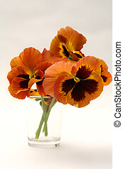 Pansy - Beautiful red yellow pansies in a vase