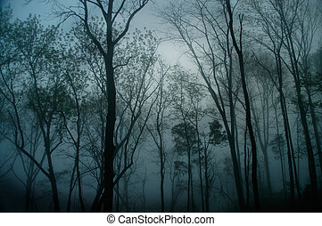 Forrest Fog - Photo taken on a wooded hillside in Nashville,...