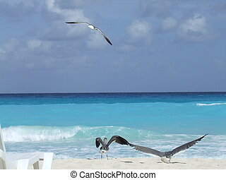 Sea Gulls at a beach in Mexico