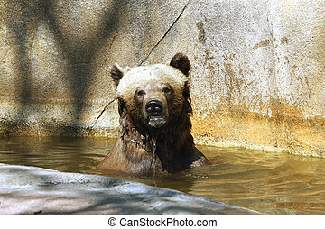 Whats happening - Brown Bear looking around