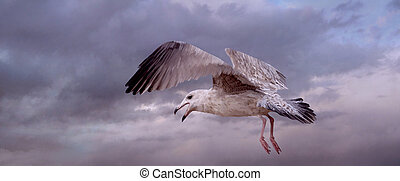 Sea Gull - An original 10x24 painting of a sea gull on the...