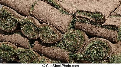 Sod - Rolls of sod on a pallet waiting to be truned into a...