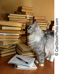 What book to choose? - Heap of books and a grey cat