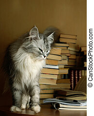 Bibliophile - Heap of books and a grey cat