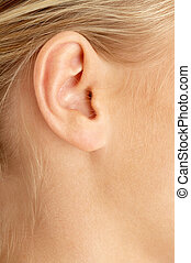 ear of blond  - color closeup picture of blond girl ear