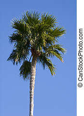 Palm Tree - A lone palm tree with beautiful blue sky in...