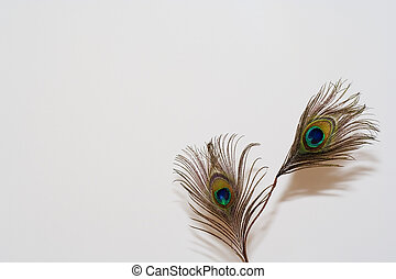 peacock feather - a peacock feather in a white background