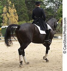 Black Dressage Horse - A black horse competing in a dressage...