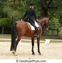 The Salute - A Dressage rider salutes the judge Taken at the...