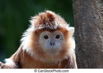 Cute monkey portrait - A curious monkey looking at you