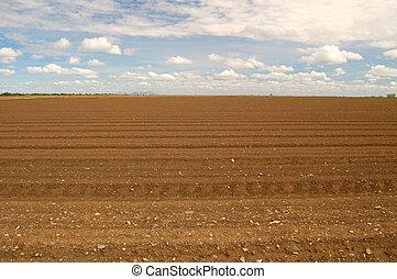agricultural field - rural farm field