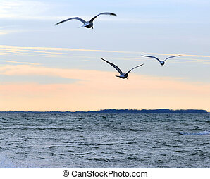 Twilight - Seagulls flying over ocean at quiet sunset