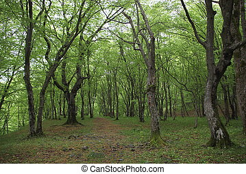Eco Trail - Eco trail in green forest