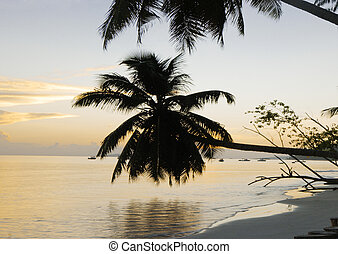 Sunrise at Cote D\\\'or bea - Cote de Or beach, Praslin,...