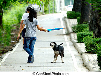 Stranger - Dog preparing to attack stranger walking by