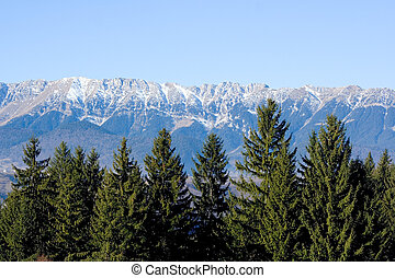 Piatra Craiului - Pine trees and blue mountains