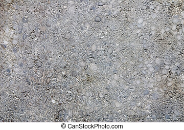 Limestone with fossil nummulites - Limestone with fossil...