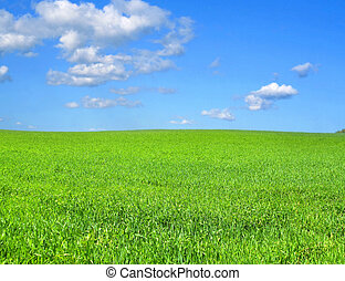 idyllic scenery - beautiful vivid green summer field with a...