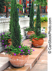 Clay Pots - Shot of four giant clay pots with some evergreen...