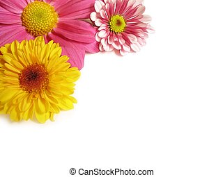 Flower corner - 1 - A close-up image of colorful...