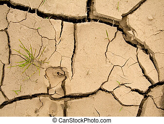 New hope - global warming - Cracked dry earth with animal...