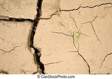 Global warming theme - Young sprouting vegetation determined...
