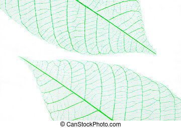 Dry leaves - Two green dry leaves on white background