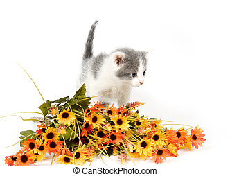 Gray and white kitten with flowers - A Gray and white kitten...