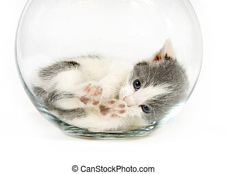 Kitten napping in a fishbowl - A kitten lays down iinside of...