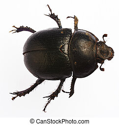 Bug - Big flying bug