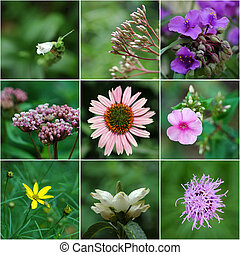 Virginia Natives - A collage of flowers native to the...