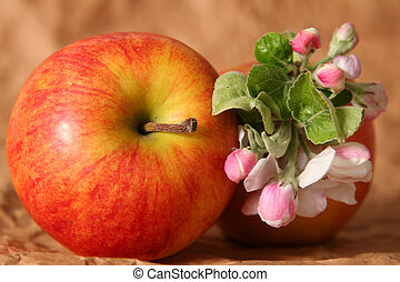 Apples and flowers - Apples and apple-tree flowers on a...