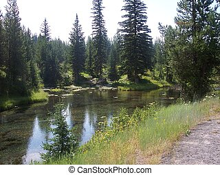 Tree Shaded Stream - This is a tree shaded stream in central...
