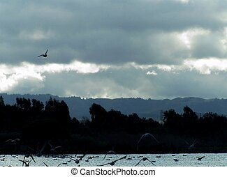 Cloudy Day on the Bay - Seagulls flying over water with...
