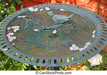 Bird bath & blossoms - A garden bird bath with pink blossoms...
