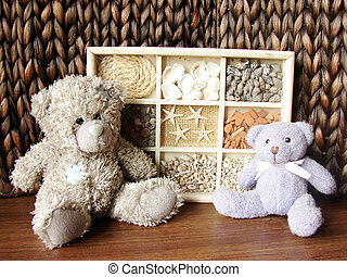 teddy-bears and seashells - the collection of seashells two...