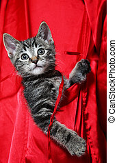 Cat in Pocket - A cute, little tabby kitten rides in the...