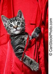 Cat in Pocket - A cute, little tabby kitten rides in the...