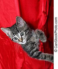 Pocket Pet - A cute, little tabby kitten rides in the pocket...