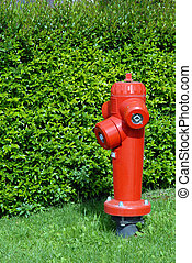Fire hydrant - Closeup red fire hydrant. green plant...