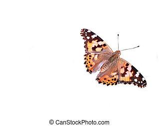 Moth - Macro / Close-Up detailed shot of Mediterranean moth