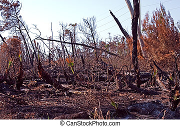 Forest fire aftermath - Aftermath of a recent florida brush...