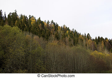 Treeline Slope - A multicoloured treeline slope