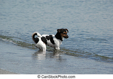 Water dog - Puppy is standing in the waterline